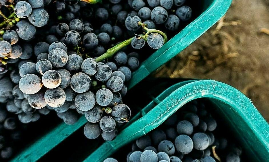 21 de 22: Fruto de uva