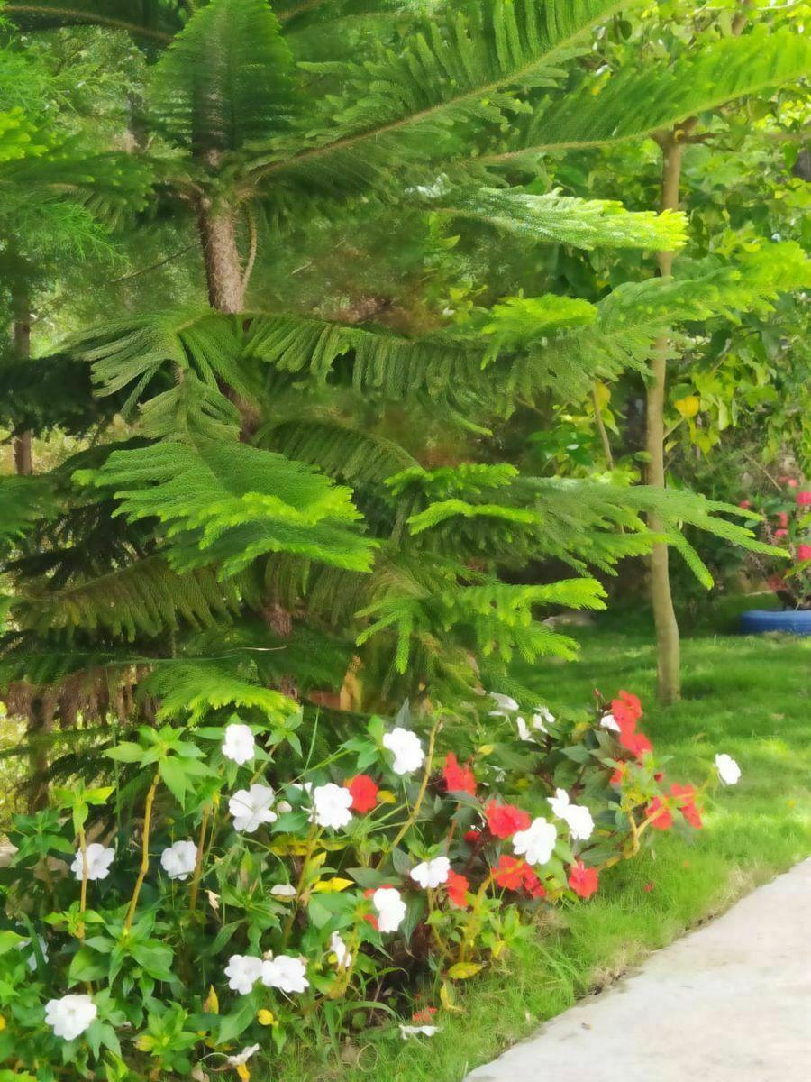 18 de 34: Jardín