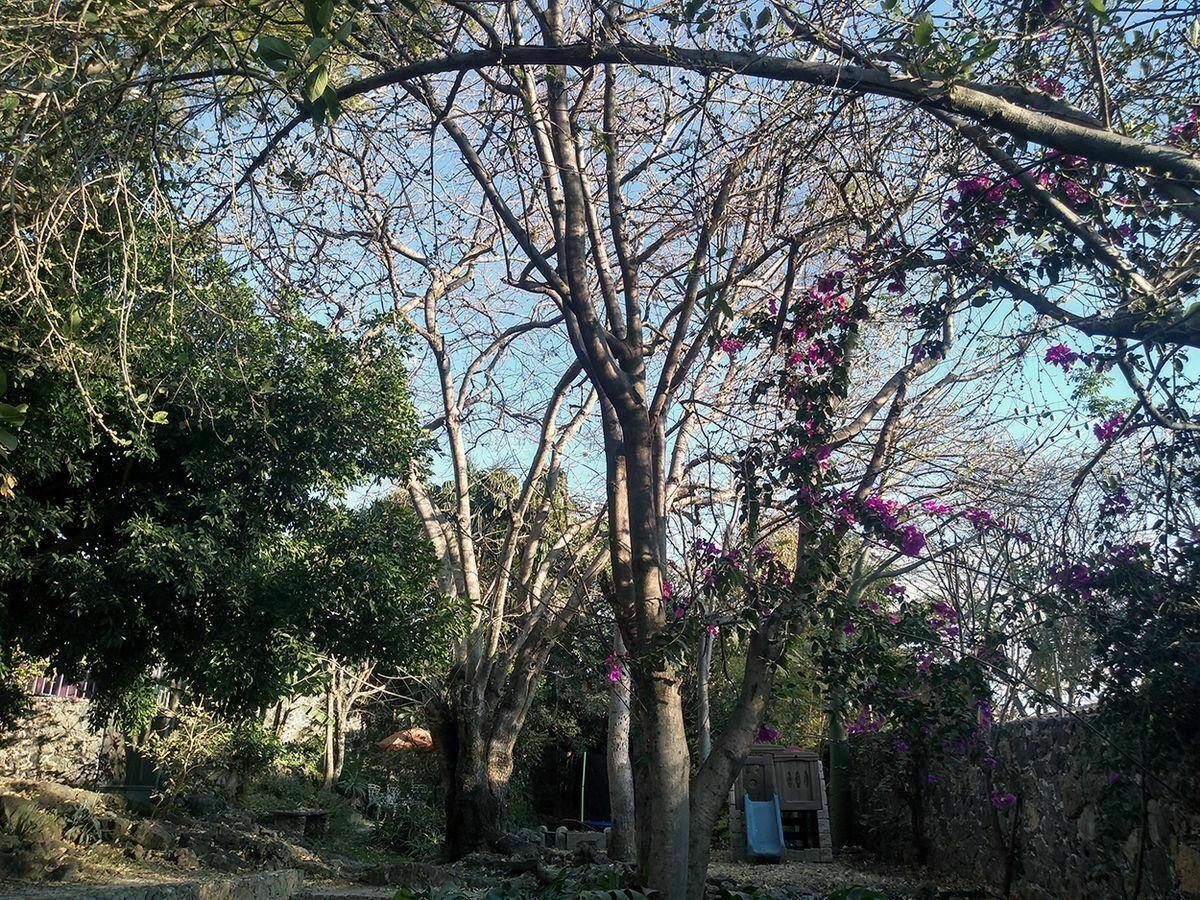 8 de 9: Jardín otra toma