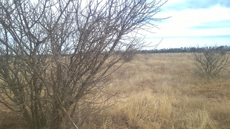 3 de 8: Vistas del Rancho