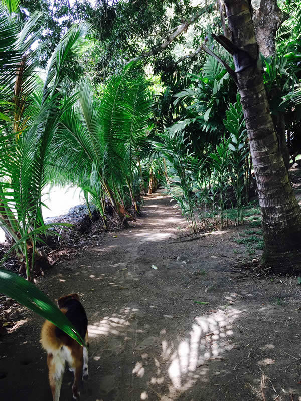 7 of 33: Beach-side pathway.