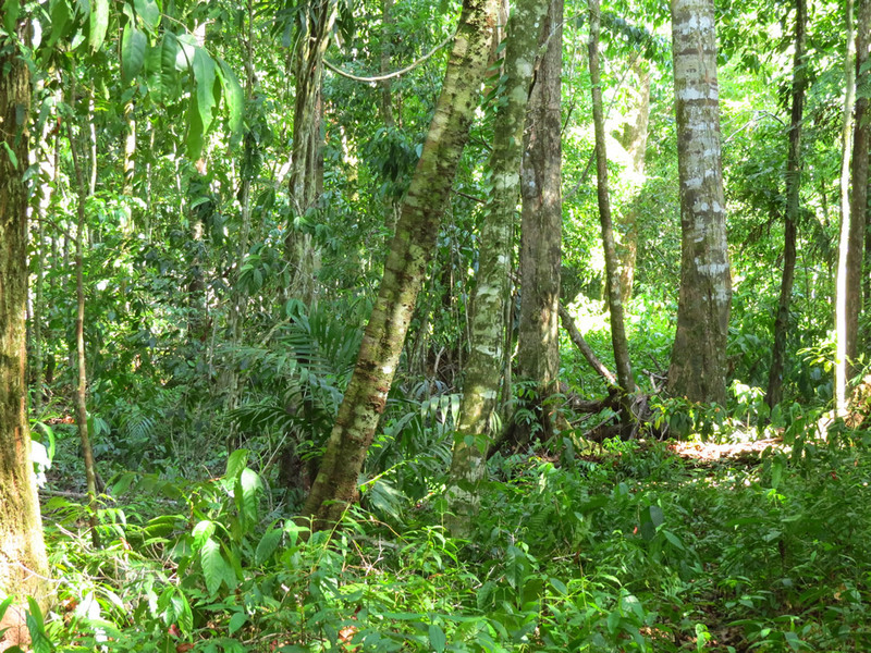 27 of 33: The upper plateau jungle