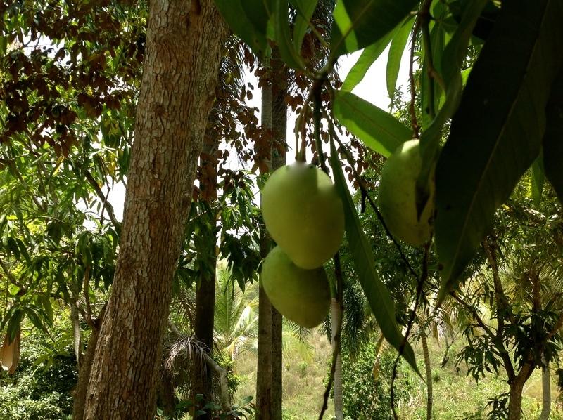 25 de 34: Frutales de la propiedad