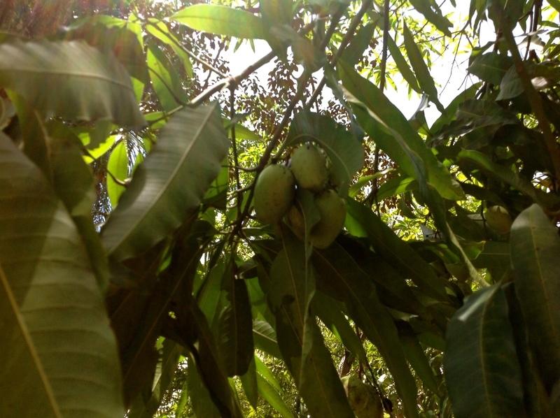 26 de 34: Frutales de la propiedad
