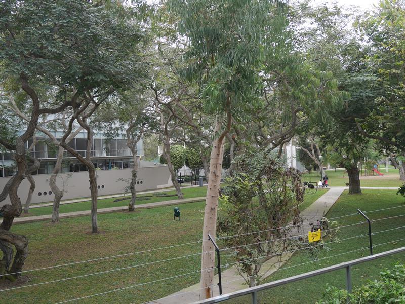10 de 39: Vista real a Parque