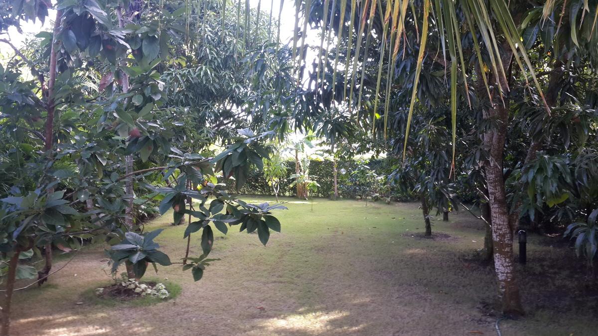 34 de 35: Jardín trasero, con árboles frutales