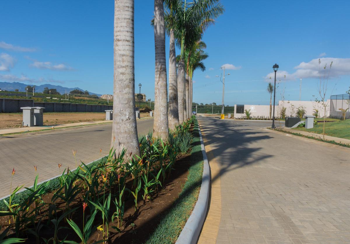 16 de 16: Boulevard de acceso