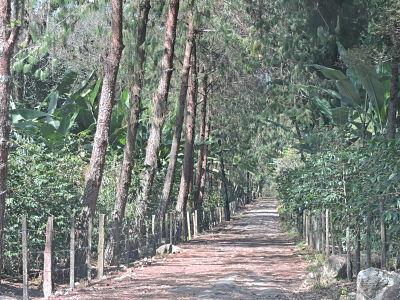4 de 19: Camino de acceso principal.