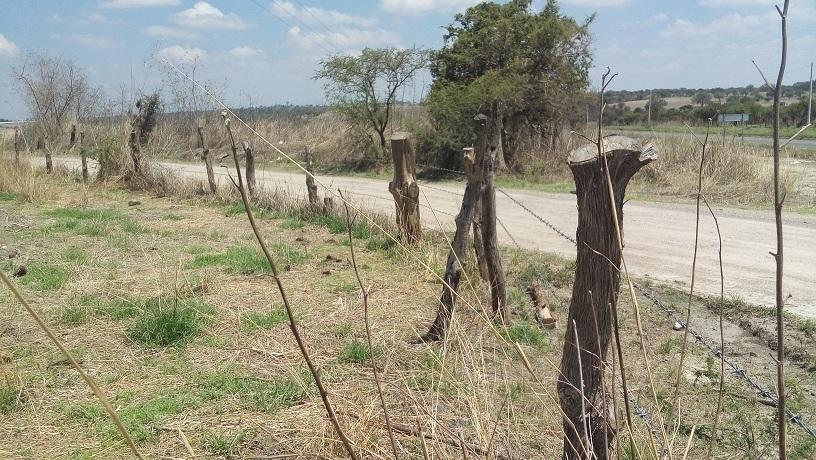 7 de 16: Camino vecinal a San Gaspar de los Reyes