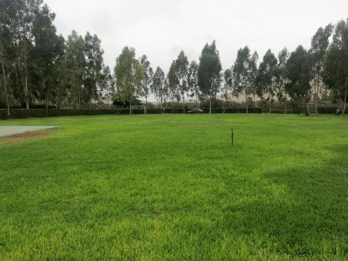 1 de 9: Hermosas áreas verdes