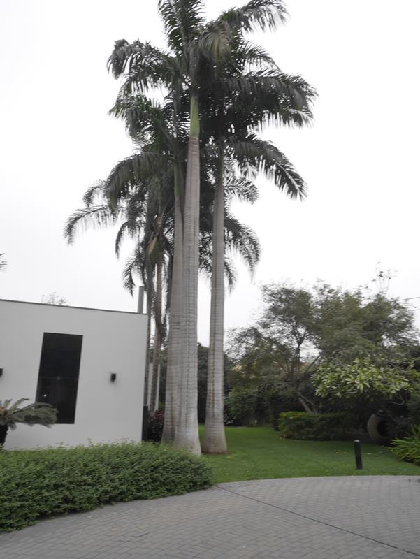 25 de 41: Vista lateral de la casa