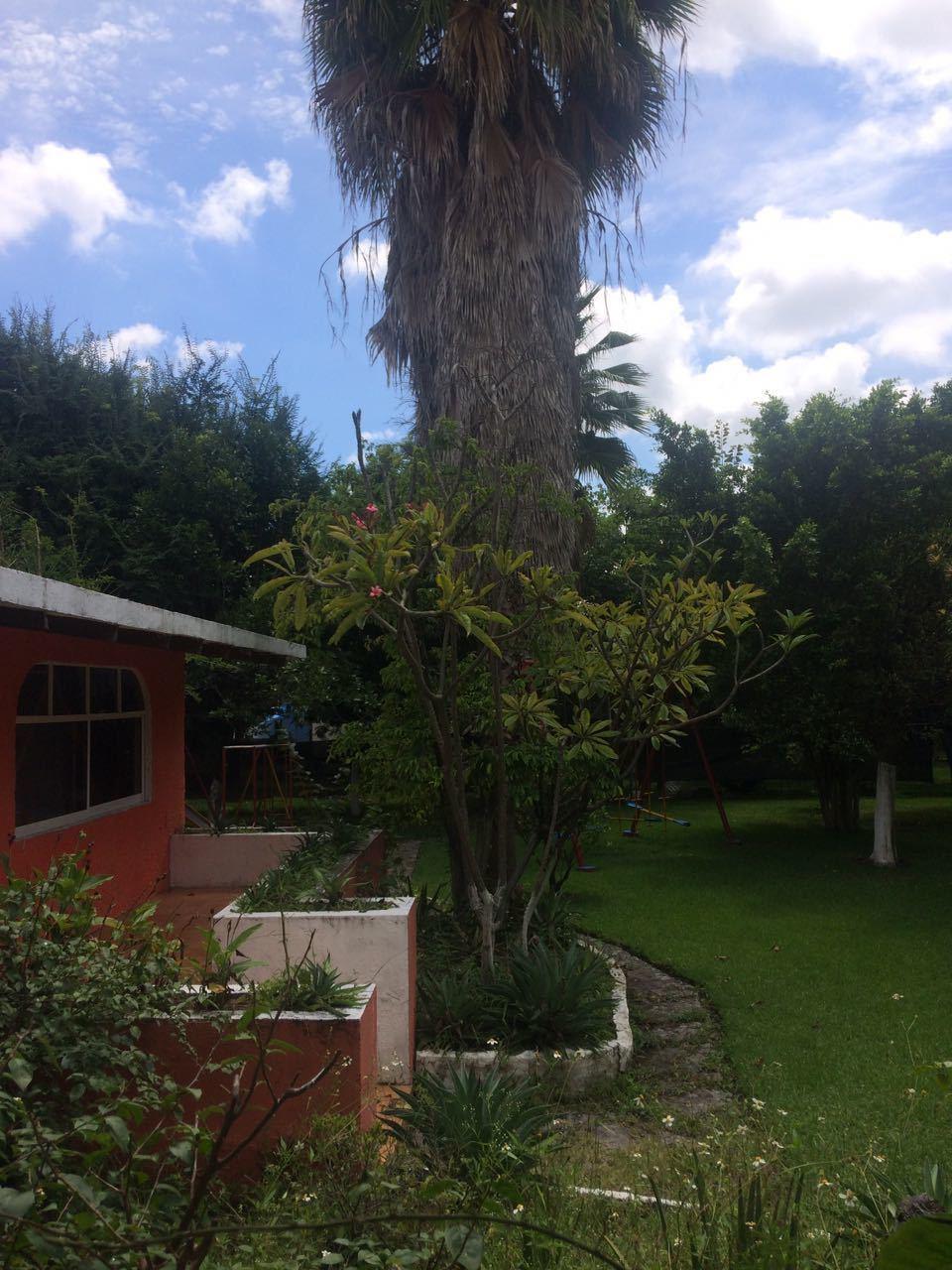 12 of 21: Jardín con Palmera