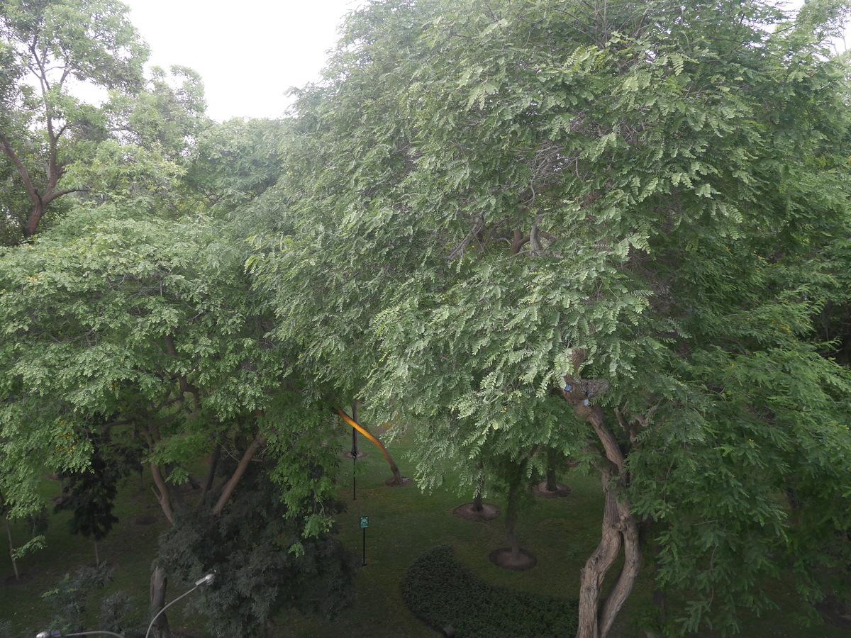 8 de 21: Vista desde la sala y de prácticamente todas las áreas