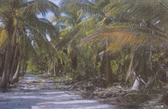 2 de 3: terreno en venta en tulum con playa
