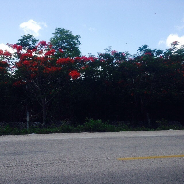 1 de 6: Terreno comercial en venta tulum
