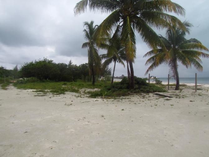 3 de 12: terreno frente a la playa en isla mujeres