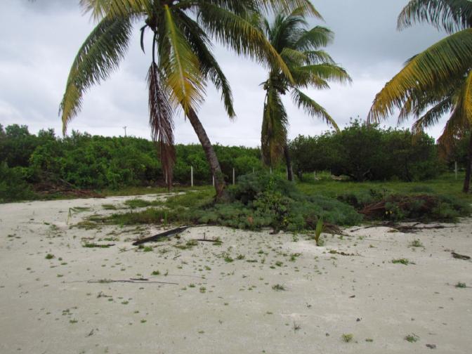 7 de 12: terreno frente a la playa isla mujeres