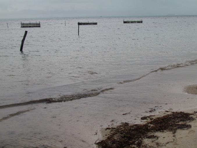8 de 12: terreno con playa en isla mujeres