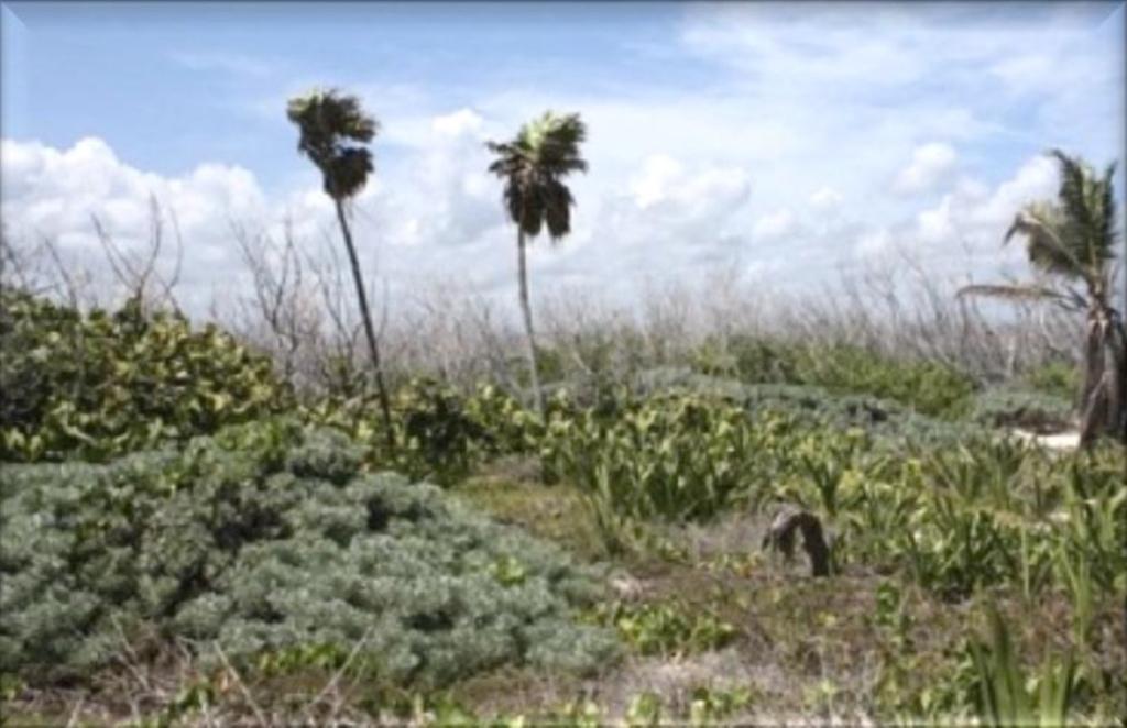 7 de 15: Terreno con playa para uso hotelero en Puerto Morelos