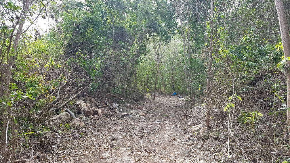 5 de 8: Terreno con suelo mixto av. colosio