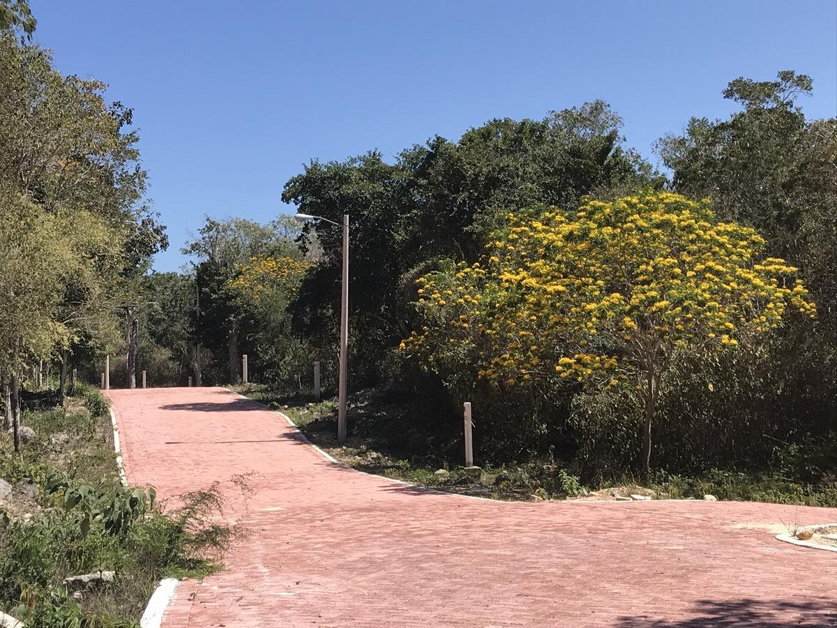 18 of 40: árbloes con flores