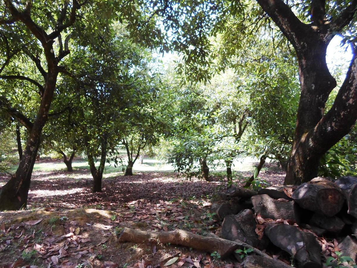 24 de 42: Huerta de Aguacates