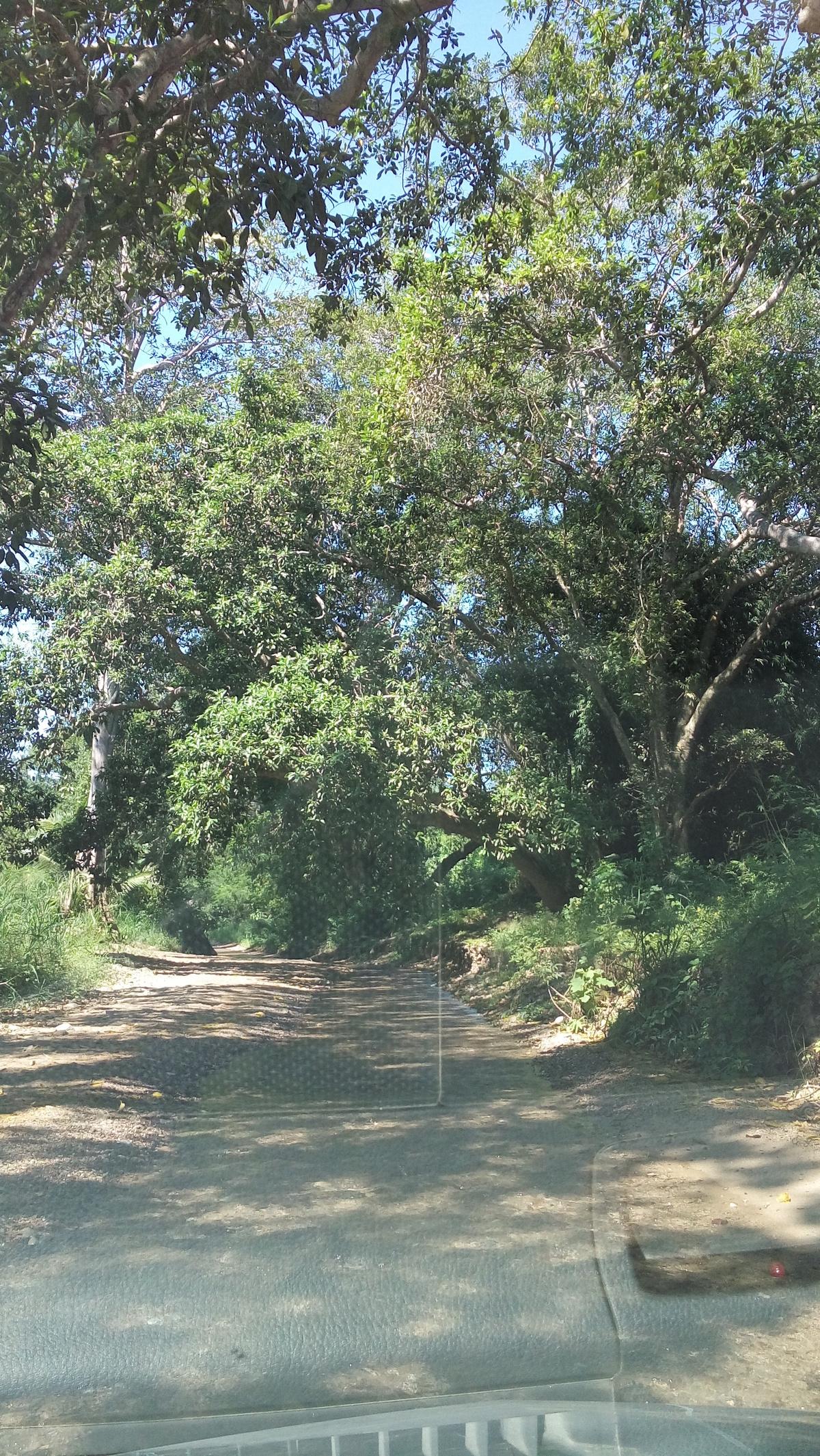 7 de 7: acceso a la zona de pazcuarito
