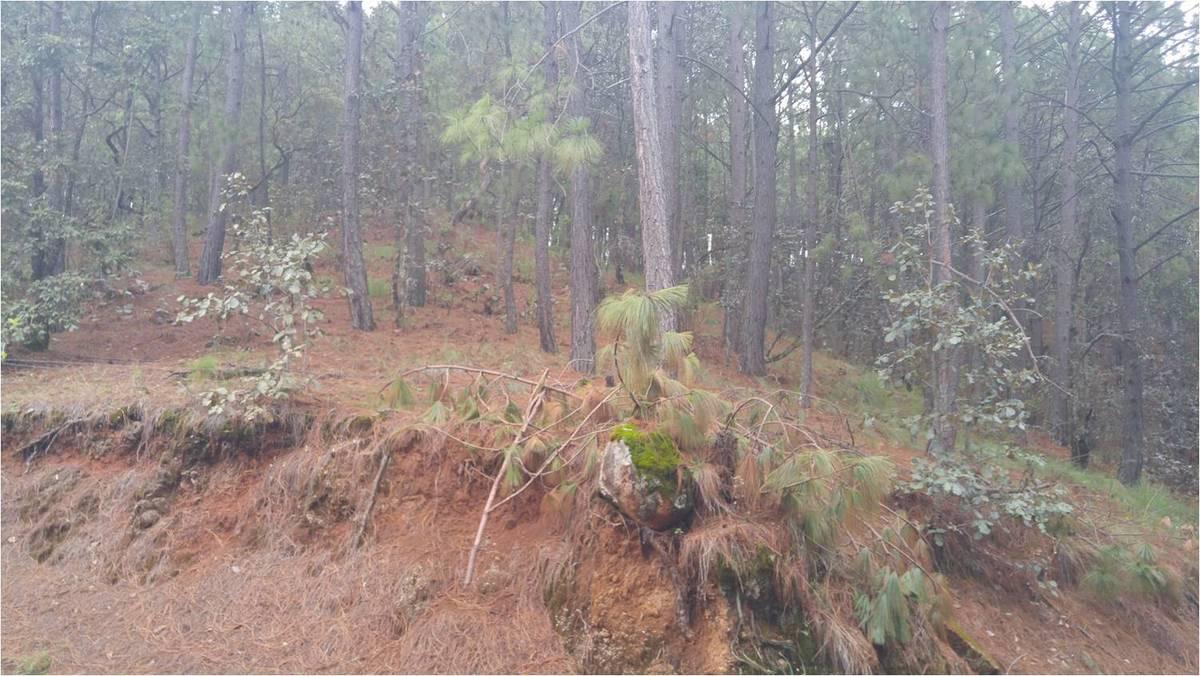 2 de 8:      Foto del terreno