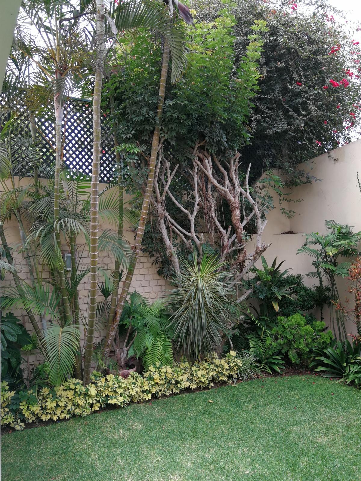 9 de 19: Hermoso jardín.