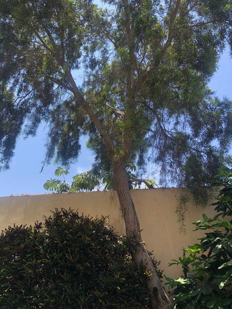 13 de 19: Gran Árbol, lindo paisajismo.