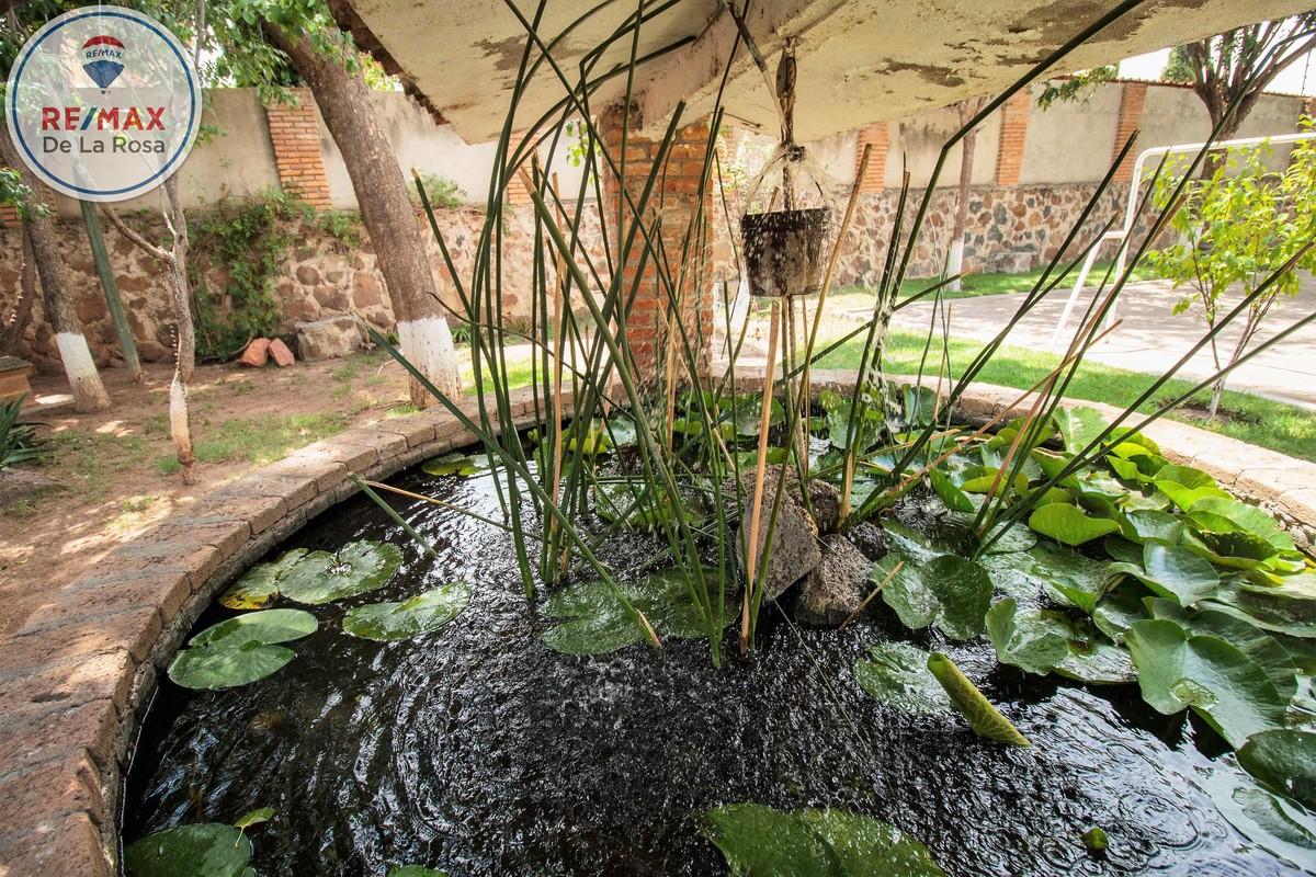 31 de 36: Pozo fuente con vegetación y peces