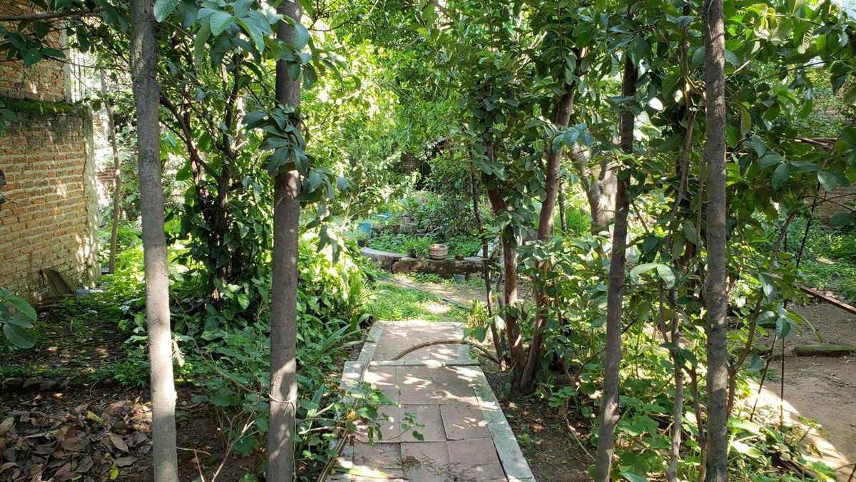 7 de 11: árboles frutales