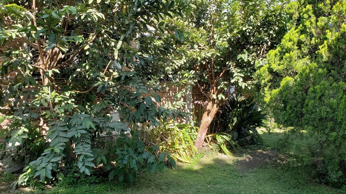9 de 11: árboles frutales