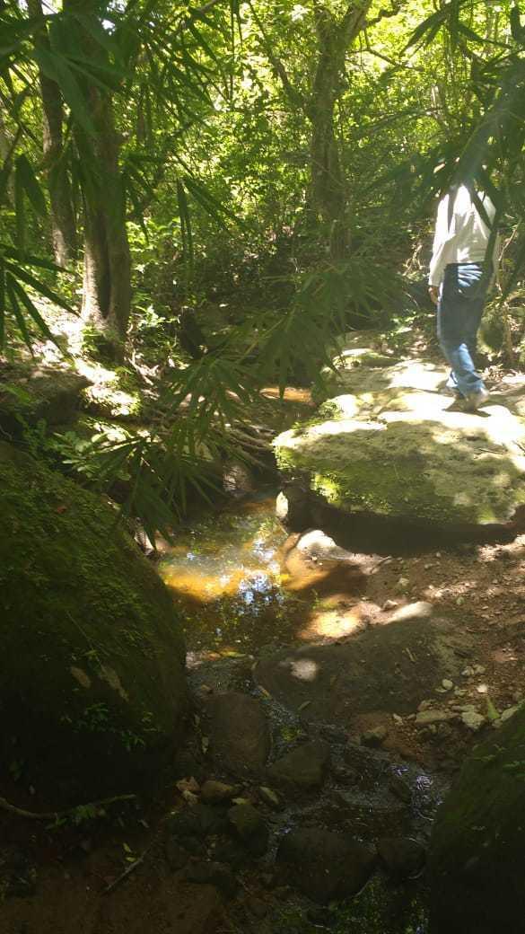 9 de 11: escurrimientos naturales (arroyos) y biodiversidad