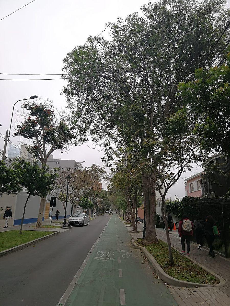 5 de 15: Hermosa cuadra de Libertadores con muchos árboles
