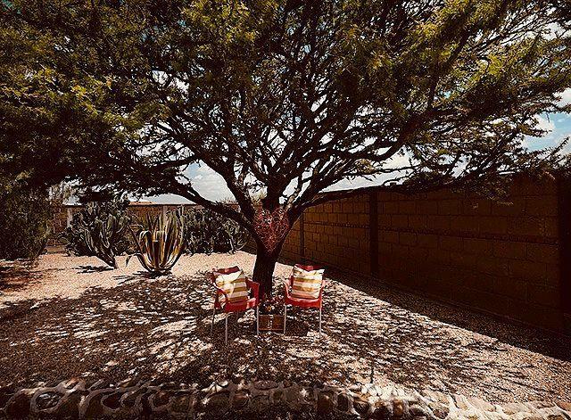 10 of 17: Bello mezquite dentro de la propiedad con agradable sombra
