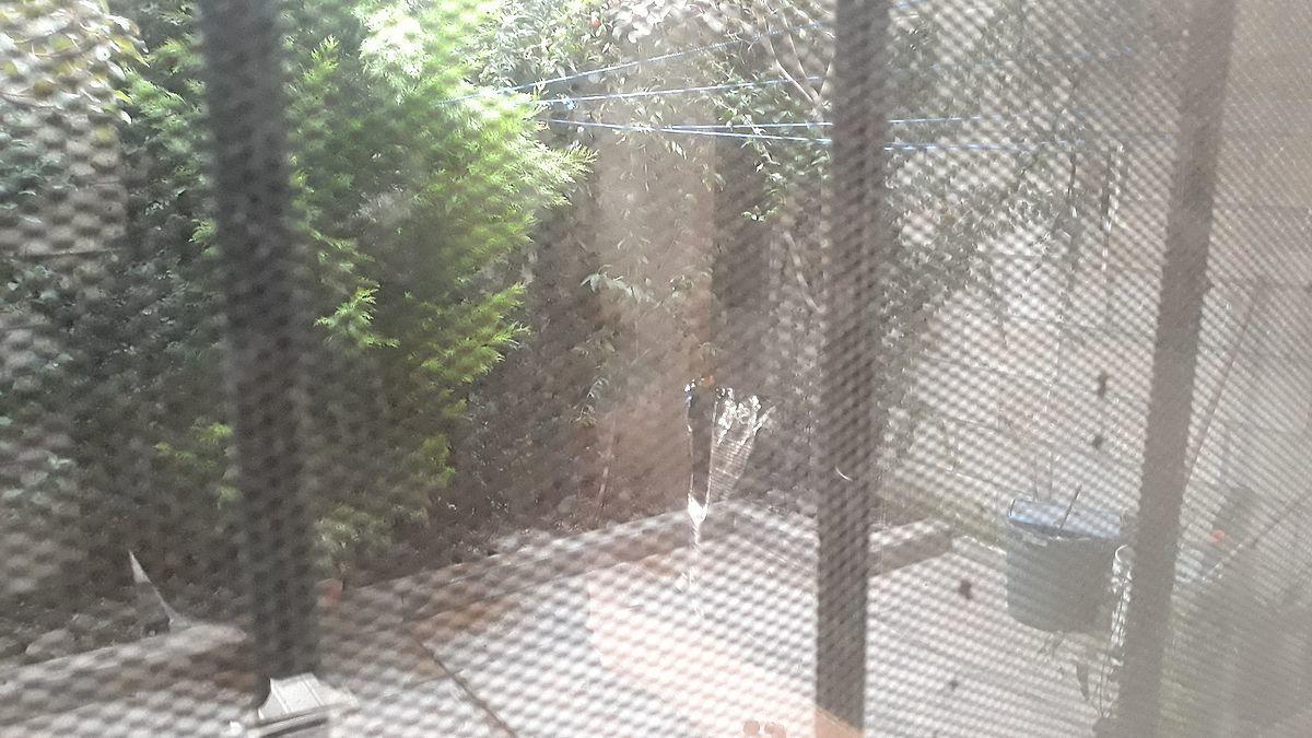 5 de 11: Patio y jardín
