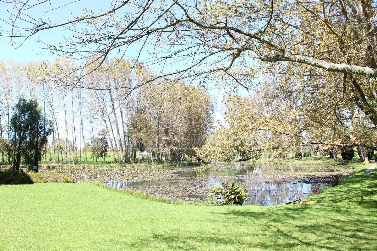 8 de 19: Jardin con laguna