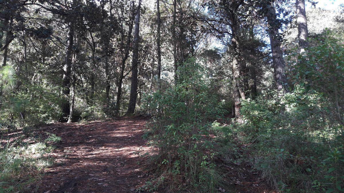 3 de 9: Interior del terreno