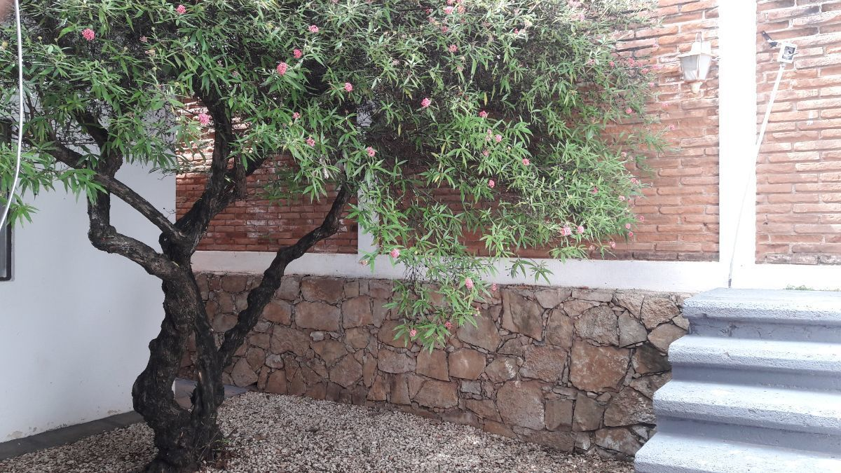 5 de 26: Jardín interno.
