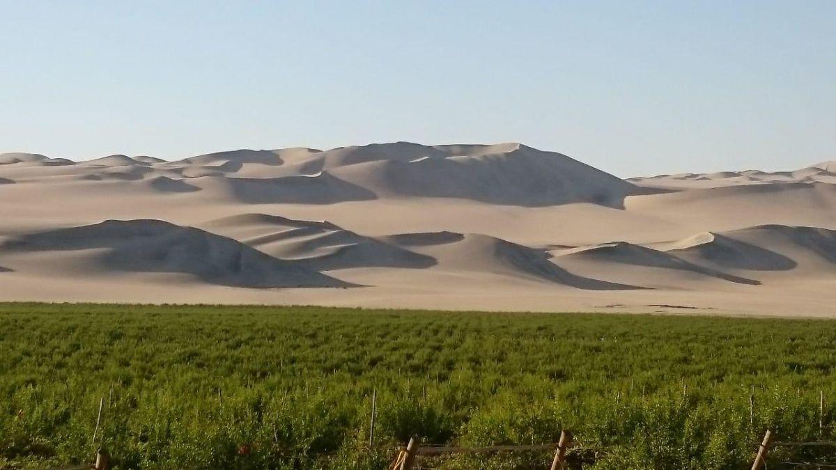 1 de 13: Terreno colinda con las dunas.