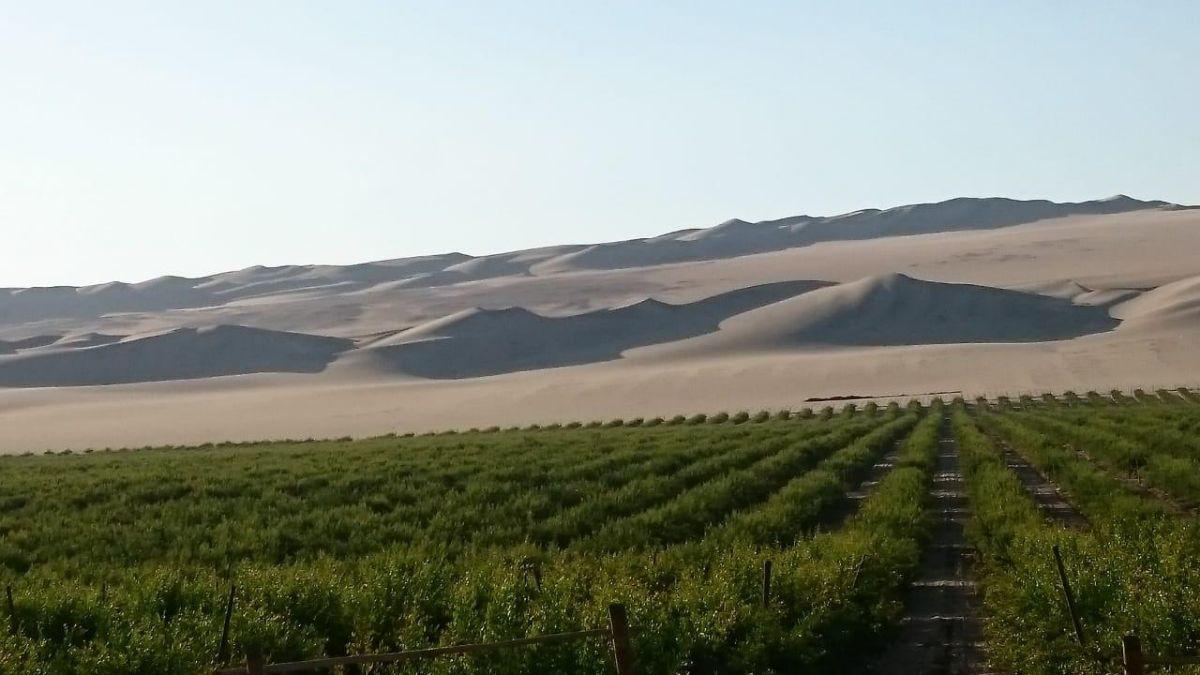 3 de 13: Plantaciones de Granada: 100Has