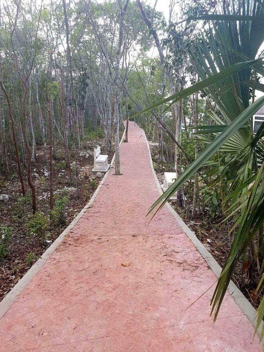 14 of 17: andadores peatonales rodeados de naturaleza