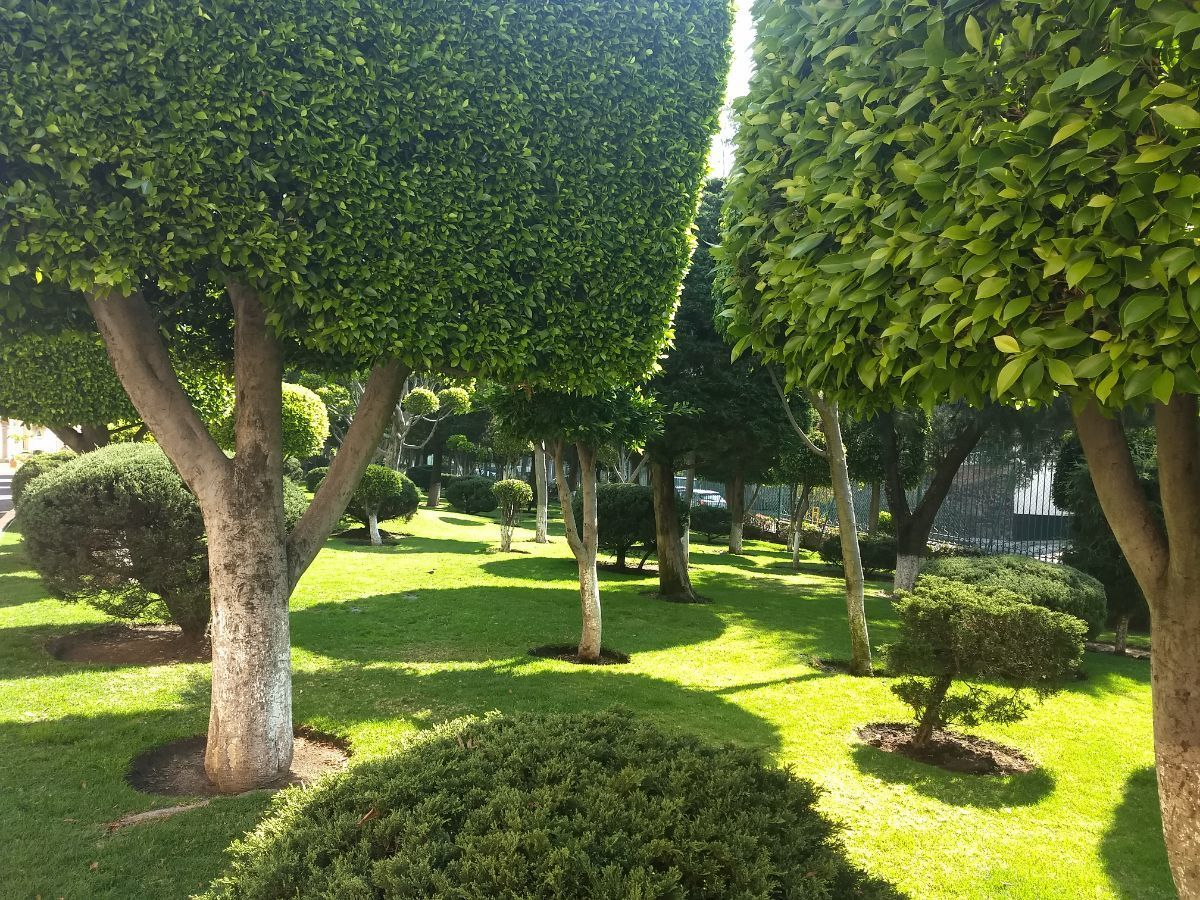 26 de 31: Extensas áreas verdes