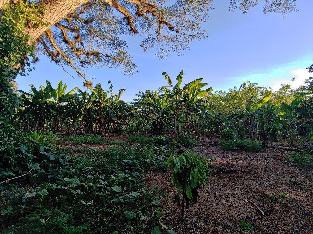 Terreno Para Agricultura Con Cacao y Platanoimage2