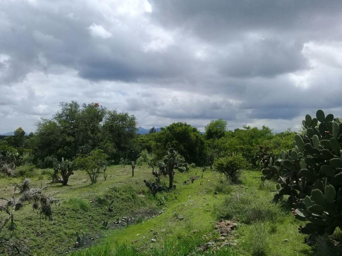 2 of 4: Lush vegetation / Abundante vegetación