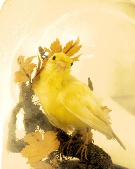 belljarbird