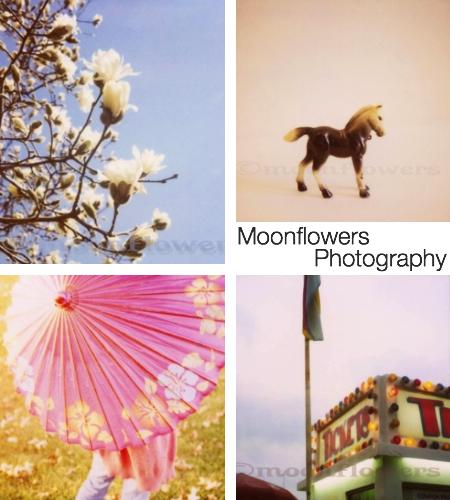 moonflowersphoto