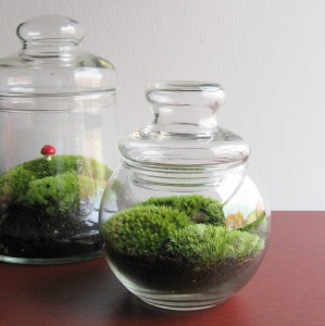 Moss Terrarium No. 131 by madebymavis