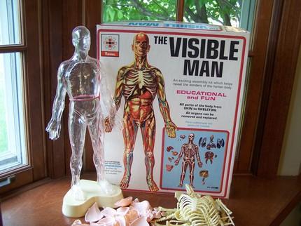 visible man